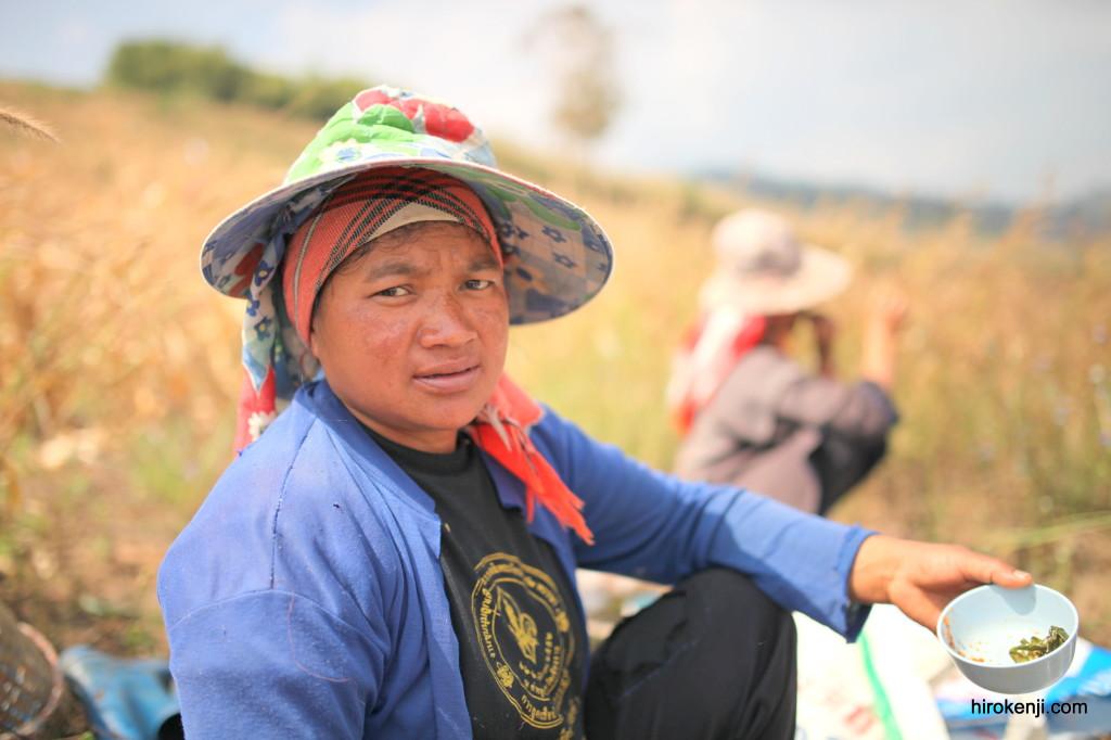タイ・メーサローン 登っては下る、美しい茶畑の山々