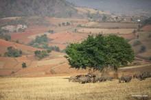 ミャンマー行ったら絶対おすすめの観光 カロートレッキングツアー 美しく広がる悠久の草原と丘