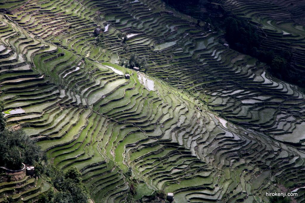 見たことない絶景!雲南省の山奥に無限に広がる棚田群!